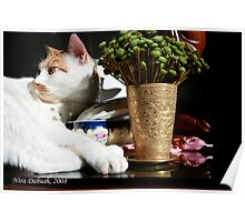 The Most Handsome Cat, for Sure :-) Poster