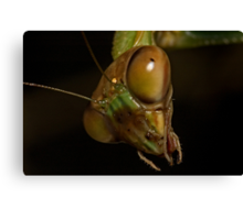 Mantis Head Canvas Print
