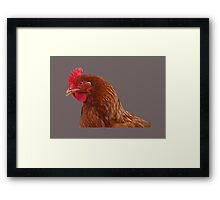 Isa brown hen Framed Print