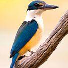 Asure Kingfisher by bettyb