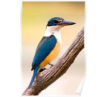 Asure Kingfisher Poster