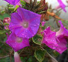 Purple flowers by ndarby1