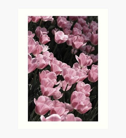Muted Pink Tulips Art Print
