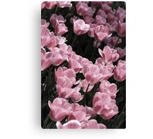 Muted Pink Tulips Canvas Print