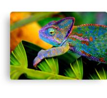 Chameleon Canvas Print