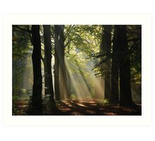 In the enchanted forest Art Print