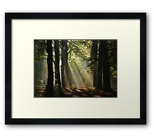 In the enchanted forest Framed Print