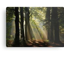 In the enchanted forest Metal Print