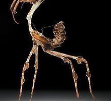 Exo-skeletal by blepharopsis