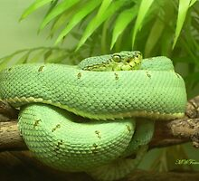 Green Snake by mwfoster