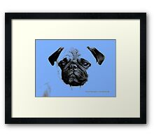 mops puppy pup baby blue Framed Print