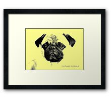 mops puppy yellow - french bulldog, funny, cute, love Framed Print