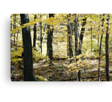 Story Book Picture. Canvas Print