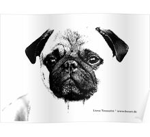 mops puppy white - french bulldog, cute, funny, dog Poster