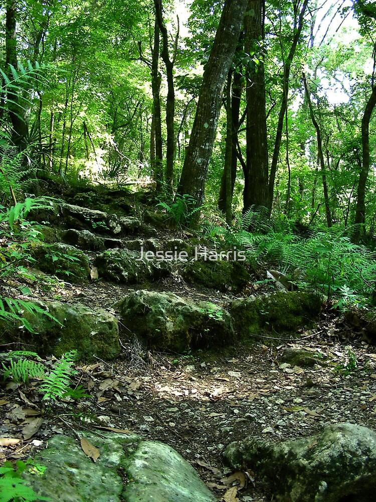 Trail Climb by Jessie Harris