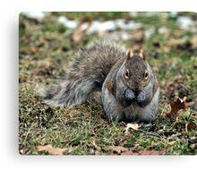Tough Nut Canvas Print