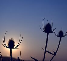 Silhouetted thistles by PigleT