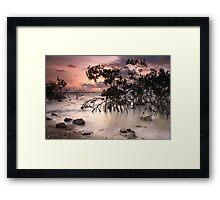 Mangroves at Dawn Framed Print