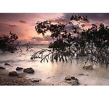 Mangroves at Dawn Photographic Print