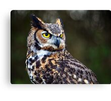 Great Horned Owl Close Up Canvas Print