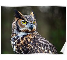 Great Horned Owl Close Up Poster