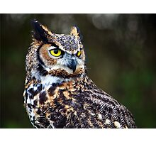 Great Horned Owl Close Up Photographic Print