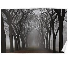 Columns of Trees in the Fog Poster