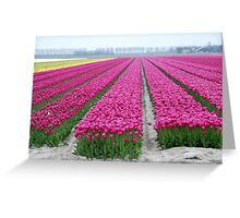 Dutch tulip field Greeting Card