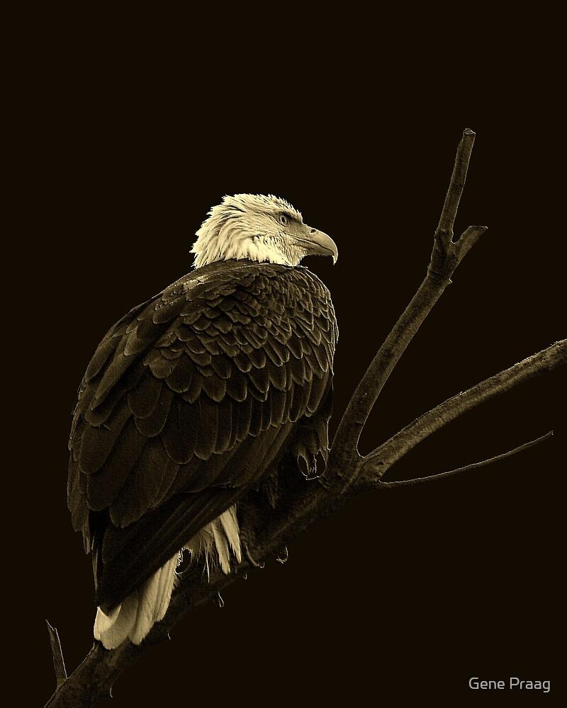 Farmington Bay Eagle by Gene Praag
