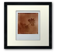 faded Framed Print