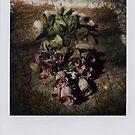 flowers for A. by Nikos Kantarakias