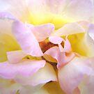 Breath of Rose by Kathie Nichols