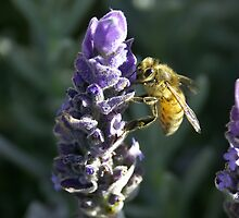 Lavender Bee 3 by Ross Jardine