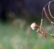 Weeds by visage