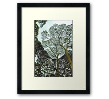 Rainforest Art - Tasmania , Australia Framed Print