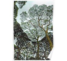 Rainforest Art - Tasmania , Australia Poster