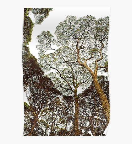 Rainforest Dreaming - Tasmania, Australia Poster