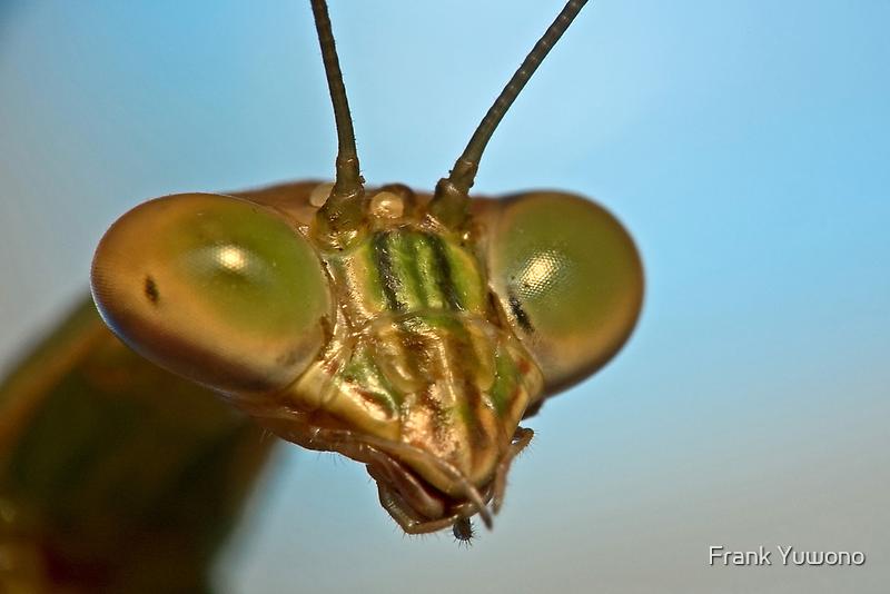 Mantis Face by Frank Yuwono