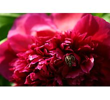Sinister Flower Photographic Print