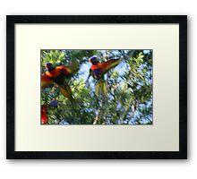 Bird Fight Framed Print