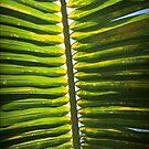 From beneath the Palm Frond. by mikeyfreedom