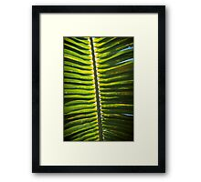 From beneath the Palm Frond. Framed Print