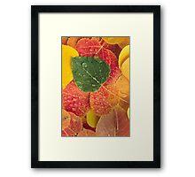 Fall N Leaves Framed Print