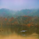 Great Blue Heron on a Misty Day by Robert Burns Miller