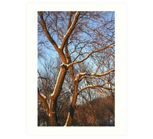 Tree With Blue Sky Art Print