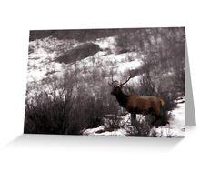 Six-Point Bull Elk Greeting Card