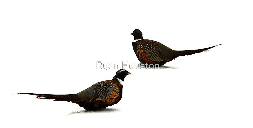 Male Pheasants in Winter by Ryan Houston