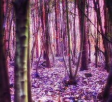 Enchanted Wood by Vicki Field