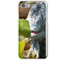 portrait of an iguana II - retrato de iguana iPhone Case/Skin