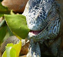 portrait of an iguana II - retrato de iguana by Bernhard Matejka